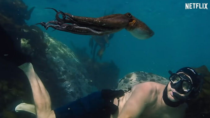 Craig Foster with his octopus friend